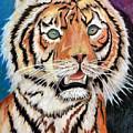 Baby Tiger by Alban Dizdari