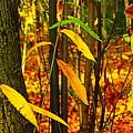 Baby Tree Foliage by Loretta S
