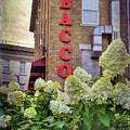 Bacco - Boston North End by Joann Vitali