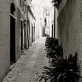 Back Alley by Corinne Rhode