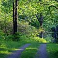 Back Road by Darlene Bell