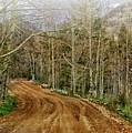 Back Road Home by Al Beard