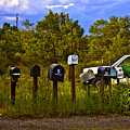 Back Road Mailboxes by Madeline Ellis