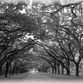 Back Roads by Kim Zwick