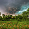 Back To Life - Spring Returns To Western Texas by Southern Plains Photography