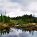 Backcountry Lake - Adirondacks by Linda Seifried