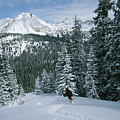 Backcountry Skiing Into An Evergreen by Tim Laman