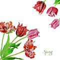 Bouquet Of Tulips by Natalia Piacheva