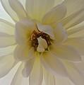 Backlit Beauty by Regina Arnold