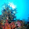 Backlit Coral by Todd Hummel