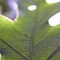 Backlit Leaf by Dustin K Ryan