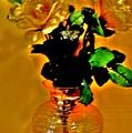 Backlit Roses by Marsha Heiken