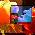 Backlit Roses by Stephen Lucas