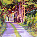 Backroad Canopy by Keith Burgess