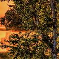 Backwaters Birch by Dale Kauzlaric