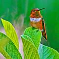Backyard Hummingbird #22 by Edita De Lima