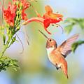 Backyard Hummingbird Series # 54 by Edita De Lima