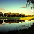 Backyard Paradise by Joyce Dickens