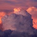 Backyard Sky by Cathy Franklin