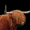 Bad Hair Day - Highland Cow - On Black by Gill Billington