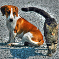 Bad Kitty 3 by Sam Davis Johnson