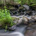 Badger Creek #2 by Robert Tilley