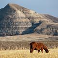 Badlands Canada Saskatchewan by Mark Duffy