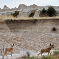 Badlands Deer Sd by Tommy Anderson