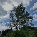 Baeume Im Wind Trees In The Wind by Eva-Maria Di Bella
