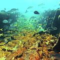 Bahamas Shipwreck Fish by Roupen  Baker