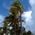 Bahamian Breeze by Gina Sullivan