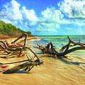 Bahia Honda State Park by Jane Fiala