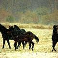 Bailando De Los Caballos En Viento Y Nieve by Anastasia Savage Ealy