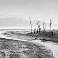 Bako National Park At Low Tide. by Louise Welcome