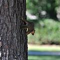 Balancing A Nut by Teresa Blanton