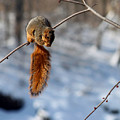 Balancing Squirrel by Steve Gass