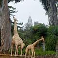 Balboa Park Bell Tower Overlooking Giraffe Statue by Phyllis Spoor