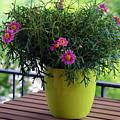 Balcony Flowers by Susanne Van Hulst