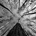 Bald Cypress Sky by David Lee Thompson