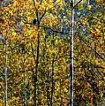Bald Eagle Along Williams River by Thomas R Fletcher