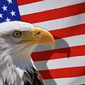 Bald Eagle And Us Flag by Sami Sarkis