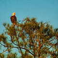 Bald Eagle Burnt Store Marina Florida by Gary Nelson