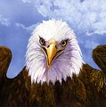 Bald Eagle by Catherine G McElroy