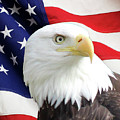 Bald Eagle Close Up by Art Kurgin