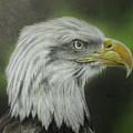 Bald Eagle Close Up by Jonathan Anderson