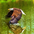 Bald Eagle Cutting The Water by Les Palenik