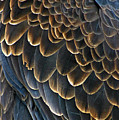 Bald Eagle Details by Brian M Lumley