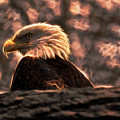 Bald Eagle Electrified by Chris Flees