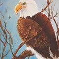 Bald Eagle by Joni McPherson