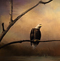 Bald Eagle On A Branch by Pam  Holdsworth